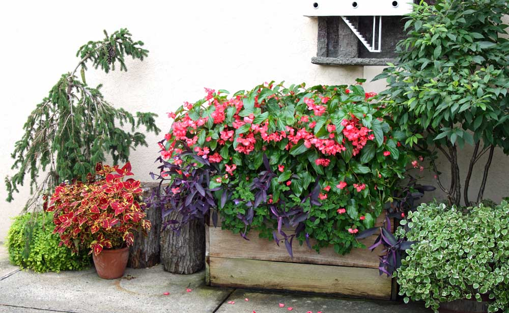 Our Seasonal Container Plantings