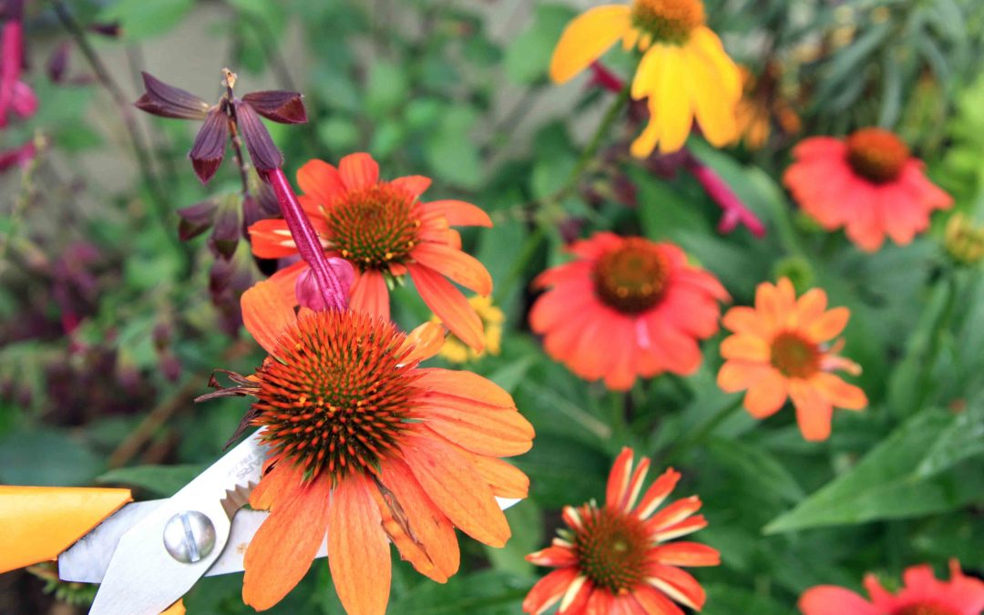 Schedule Your Fall Garden Maintenance Today!